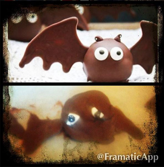 bat truffle fail