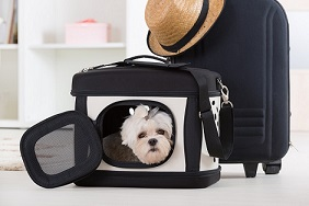 dog in carrier