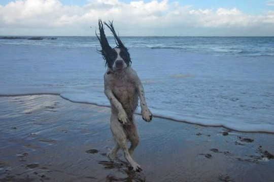 A dog in high winds at the beach