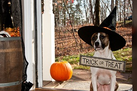 dog with a witch hat
