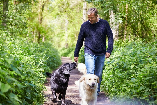 A man taking 2 dogs for a walk in the woods
