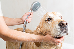 Dog having a shower